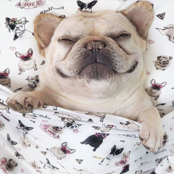 home accessory yeah bunny bedding bedding pillow pugs frenchie dog