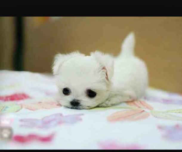 home accessory animal dog baby animal