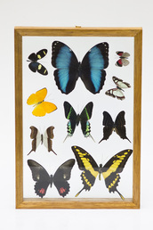 home accessory,tinkuy shop,peruvian decor,tinkuy,peruvian tradition,peruvian product,butterfly