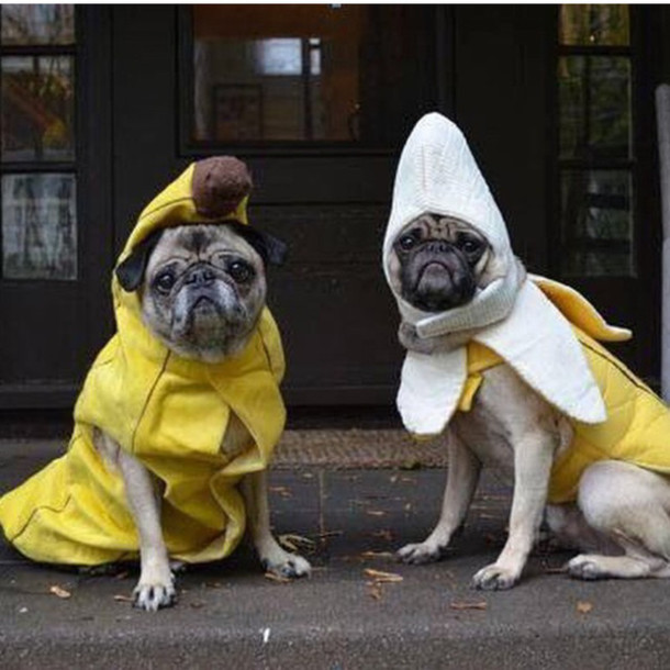 jumpsuit bananas pugs halloween costume halloween animal funny