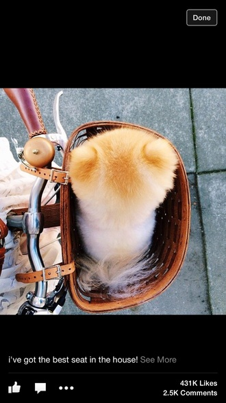 home accessory dog cute hipster bicycle