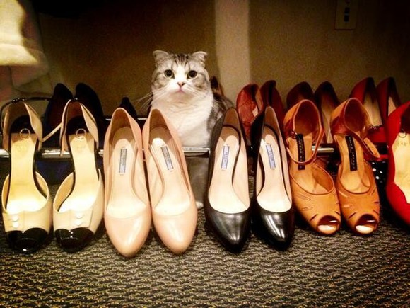 taylor swift shoes cats girly pink black beige red flats