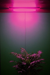 home accessory,pink,plants