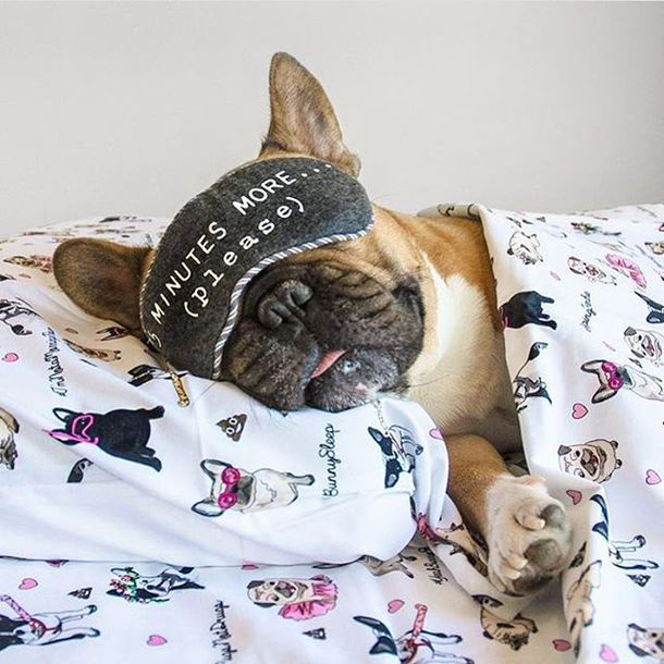 home accessory yeah bunny bedding tbedding set pillow dog frenchie pugs