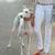 District of Chic: handsome hound