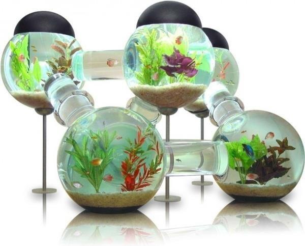 jewels fish tank fish tank top water