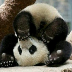pandashopaholic16