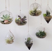 plants,hanging plants,home decor,transparent,green,lifestyle,home accessory,ceiling decor,aesthetic,glass,gold chain