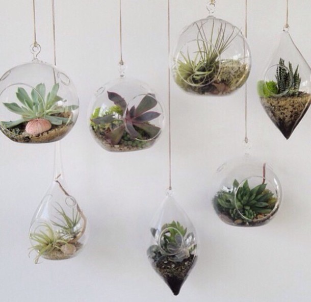 plants plants hanging plants home decor green lifestyle home accessory ceiling decor aesthetic glass gold chain
