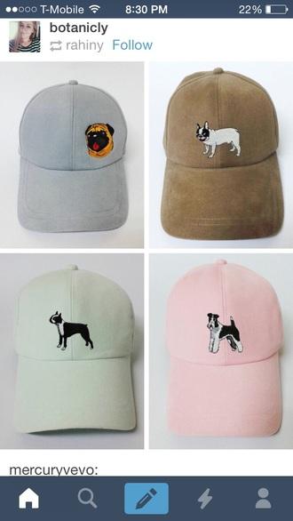 hat dog animals cute pink pug terrier green blue tan