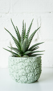 home accessory,pastel,pastel green,home decor,bedroom,beach house,pineapple,plants