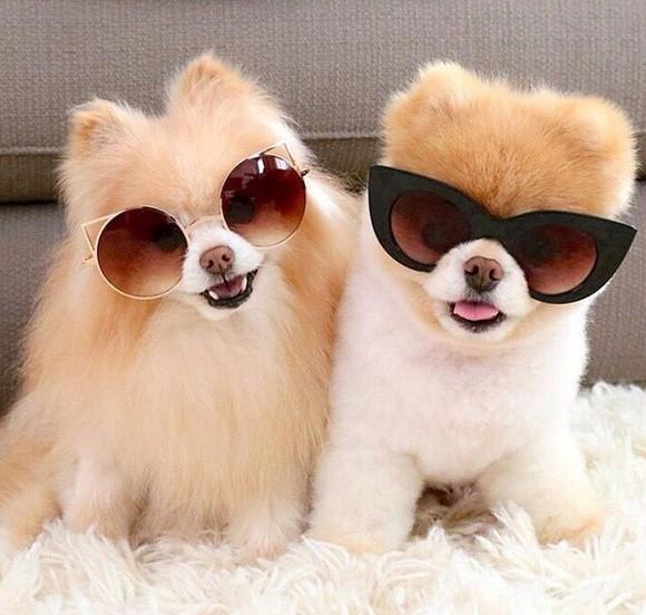 sunglasses black glasses cateye sunglasses