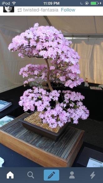 home accessory plants pink pretty bonzai cherry blossom