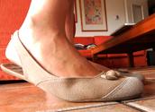 shoes,flat,ballerine,ballerina