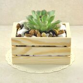 home accessory,succulents,plants,home decor,nature,plant crate,sivalya