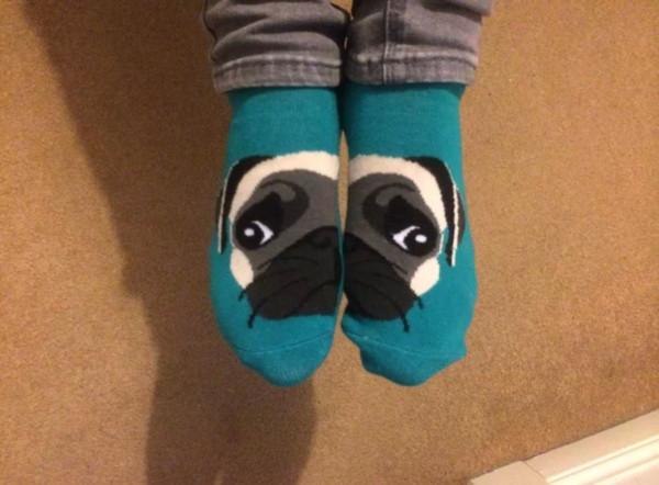 shoes socks pugs pug socks blue