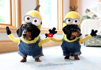 home accessory minions dog disguise fancy cute