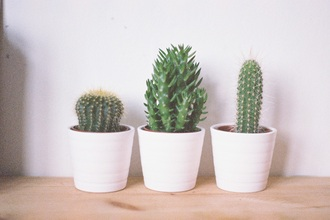 home accessory small plants tumblr bedroom cactus