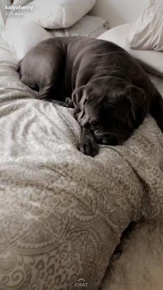 home accessory grey bedding katya henry dog pet snapchat