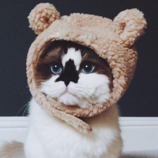 hat cats beanie