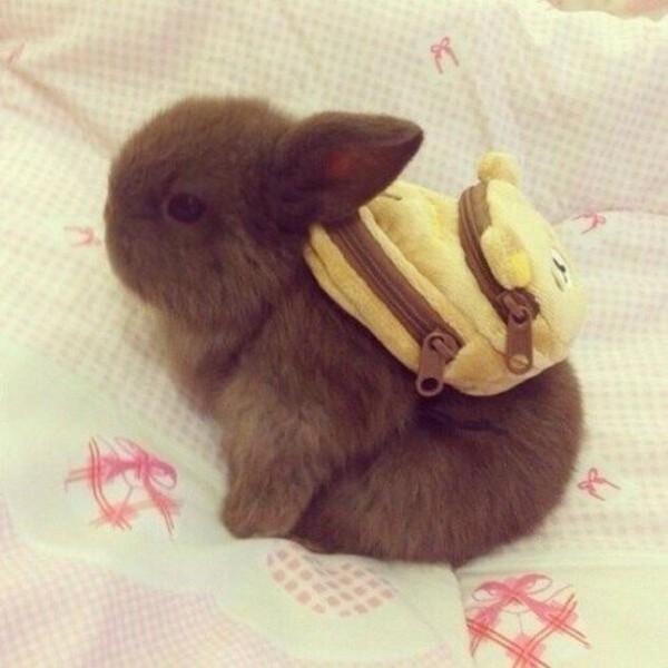bag bunny cute animal clothing easter