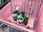 home accessory,plants,cactus,office supplies