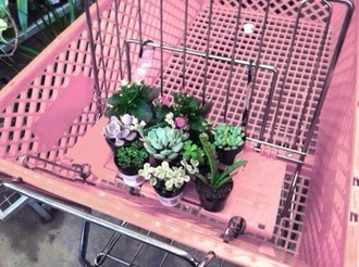 home accessory plants cactus office supplies