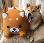 home accessory,toy,dog,bean bag,kawaii,kawaii accessory,stuffed animal,holiday gift,gift ideas