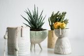 bag,plants,pot,faces,people