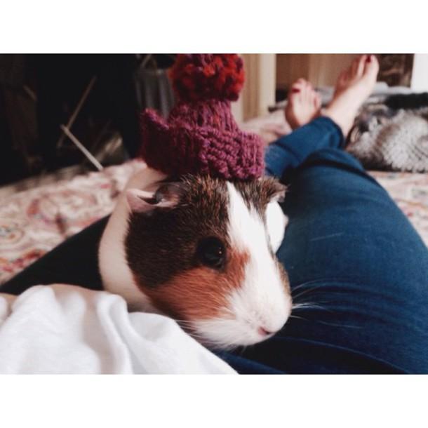 hat beanie guinea pig michelle pom pom beanie