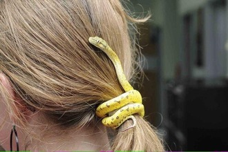 yellow snake fake snake hair bow hair accessories hair clip hair ties