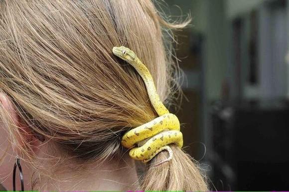 hair bow hair accessories snake yellow fake snake hair clip hair ties