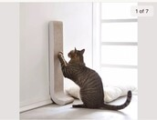 home accessory,cats,pet,animal,furniture,white,nude
