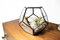 Small geometric terrarium kit / dodecahedron / air plant kit / ships to canada