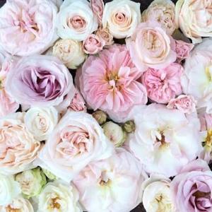 Rosewren