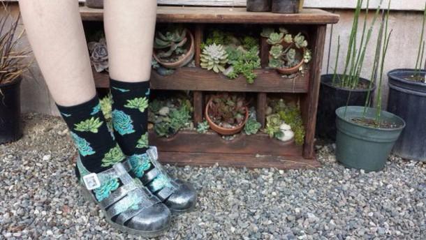 socks plant socks