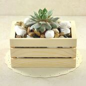 home accessory,succulents,home decor,plant crate,nature,sivalya