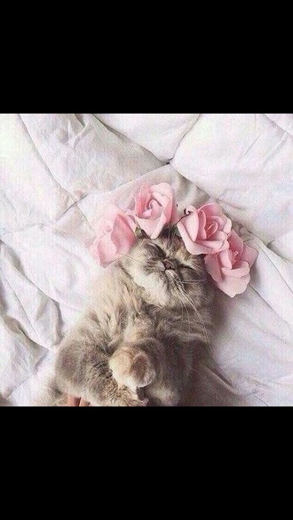 cats flower crown girly cute animal clothing