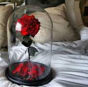 home accessory,beauty and the beast,beauty insanity,disney,flowers,roses