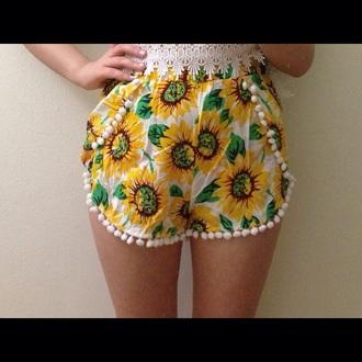 sunflower pom pom daisy su flower pompom