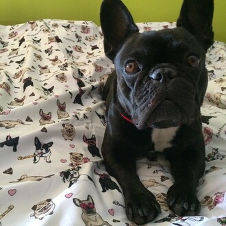 home accessory yeah bunny bedding queen bed pugs dog frenchie