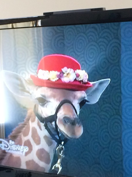 hat floral giraffe headband