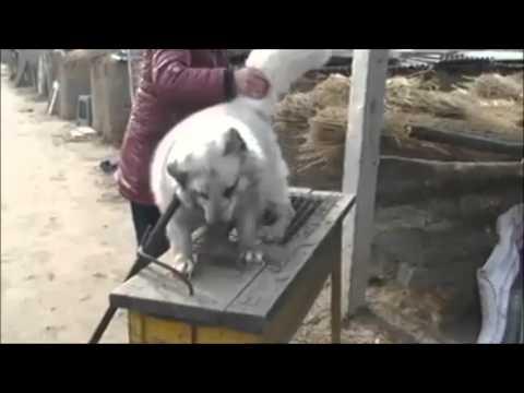 The Real Price of Fur (Peta shocking video) - YouTube