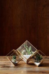 home accessory,terrarium,geometric,gold,home decor,plants