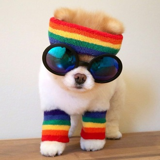 home accessory dog boo cute fitness headband sweatband colourful adorable pomeranian sunglasses cool animal clothing