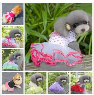 dress dog clothes pet
