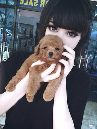 dog cute fluffy animal