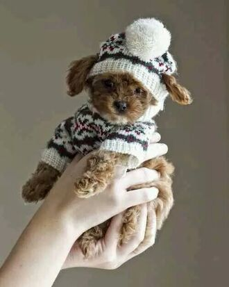 cutesweater dog christmas coldweather puppy pom pom beanie christmas sweater animal holiday season animal clothing love sweater