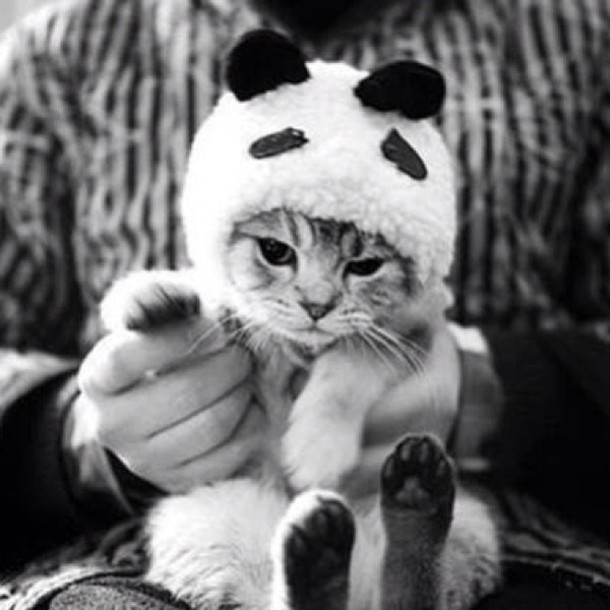 Hat Cats Cute Cats Panda Black White Animal Animal Clothing Wheretoget