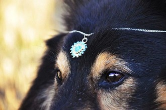 jewels doggie acsessories blue dog helpmefindthis